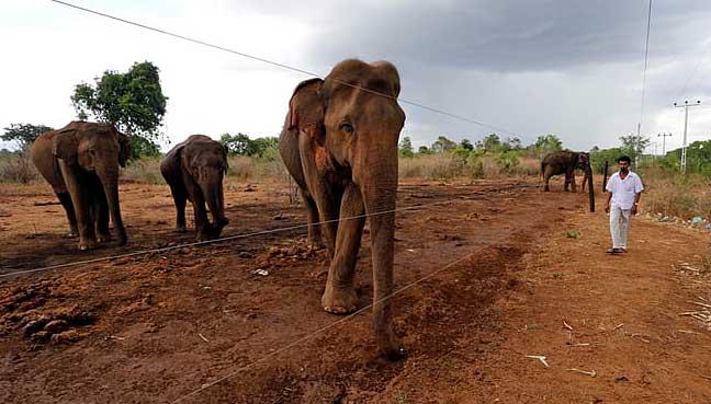 elephant-india