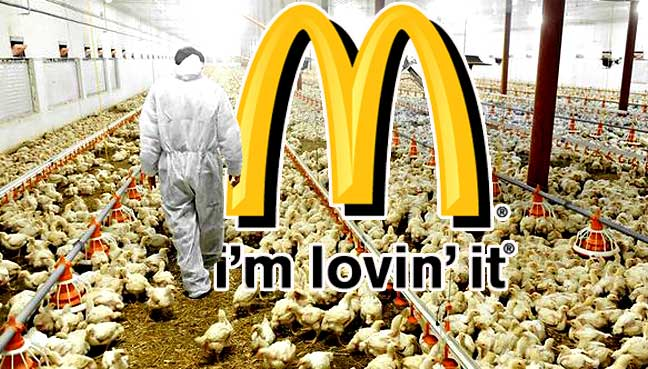 McDonald's sets new welfare standards for chickens