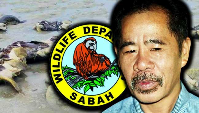 Wildlife dept to investigate after green turtles found butchered in Sabah