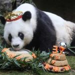 basi-panda
