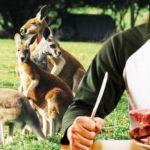eat-kangaroo