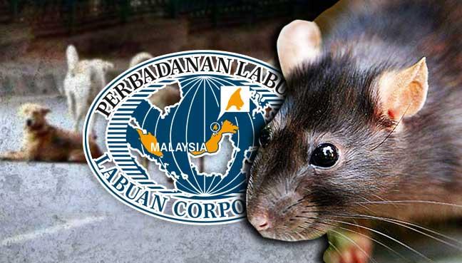 labuan-corporation-stray-dog-rat