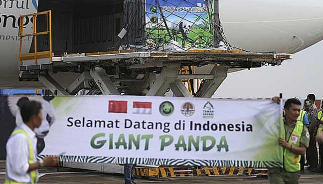 panda-indonesia