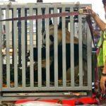 panda-indonesia2