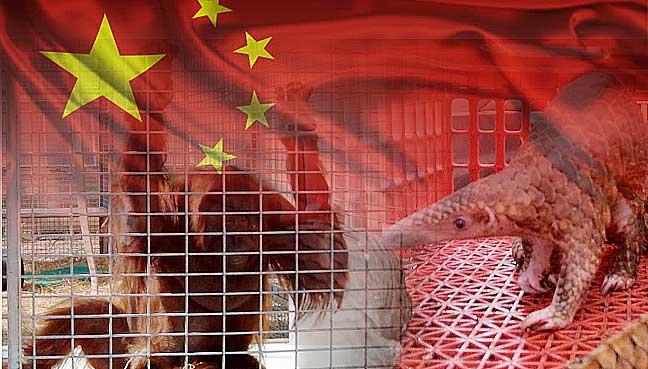 Syndicates target Kuala Perlis to traffic wildlife to China