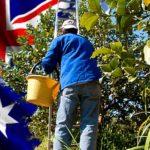 fruit-pickers-australia