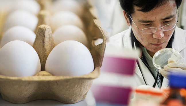 Image result for japanese scientist create drugs in eggs