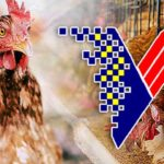 The-Veterinary-Services-Department-malaysia-poultry