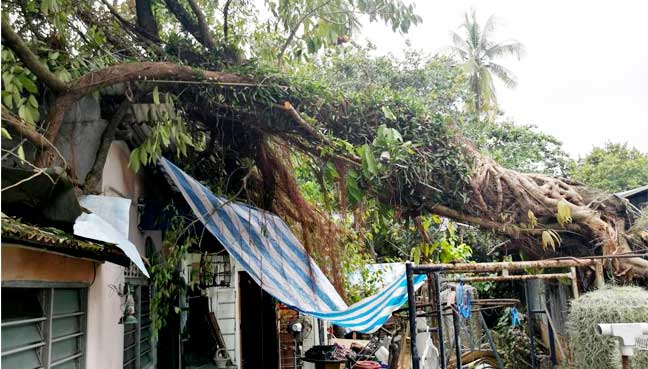Despite making repeated calls to the city council, resident Ruslinda Mohd Nor says a large tree has yet to have been removed. She is afraid that it might split her home into two.
