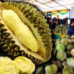 durian_pesta_600