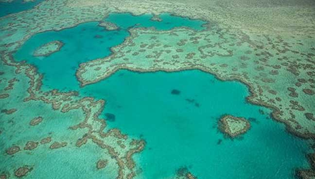 Great Barrier Reef undergoes 'IVF procedure'
