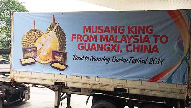 musang-king-road-to-china-1