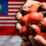 palm-oil-malaysia-indonesia-1