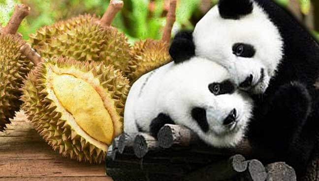 panda-durian-china-1