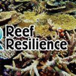 reef-resilience-malaysia-australia