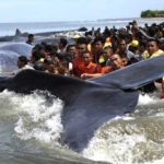 whale-indonesia