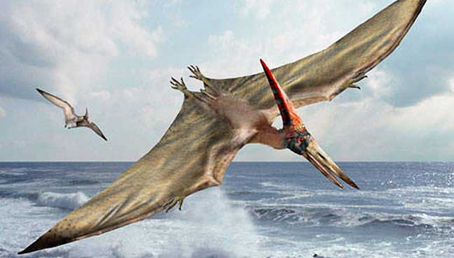 Baby Pterosaurs Couldn't Fly as Hatchlings