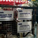 adoption-1