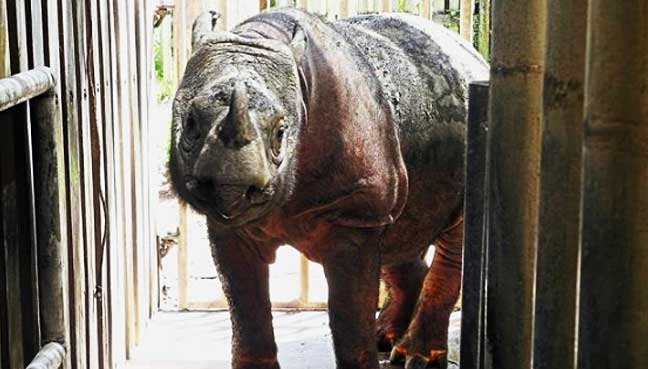 iman-rhino