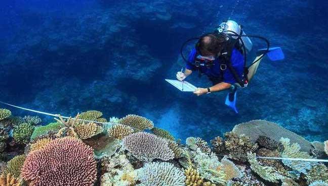 Global-coral-bleaching