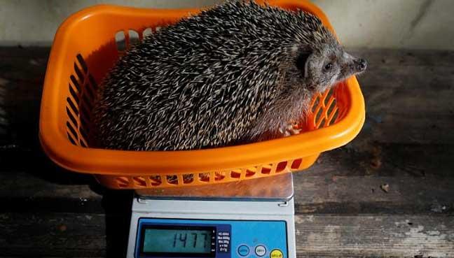 Cat Ate Hedgehog Food