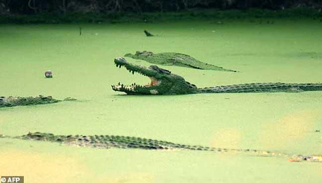 croc-afp