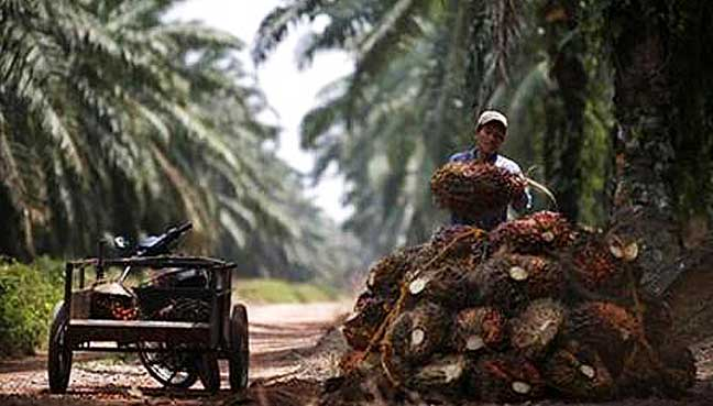 palm oil poverty fighter or environmental Palm oil poverty fighter or environmental killer the rapid globalization and dismantling of trade barriers is resulting in many changes in today's international.