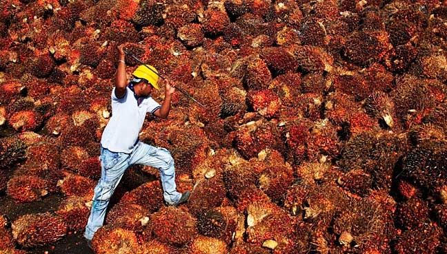 Palm oil extends fall to one-month low