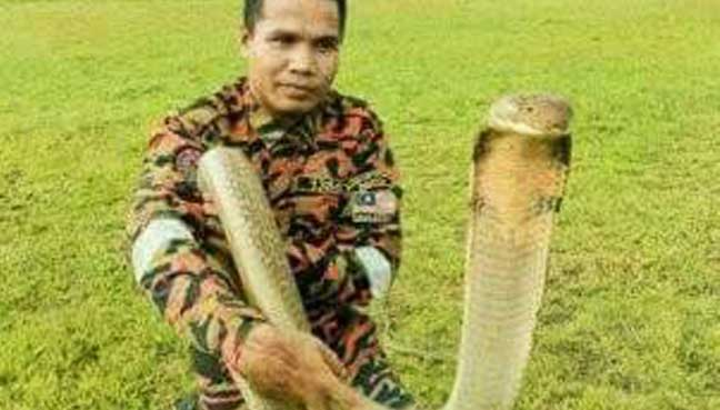 Malaysia's most famous snake-catching fireman dies after being bitten by cobra