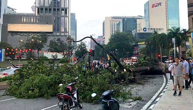 Couple injured by fallen tree near KLCC [NSTTV]