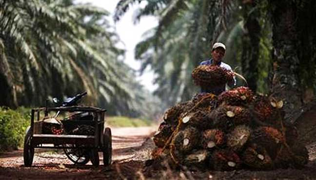 reuters_oil_palm