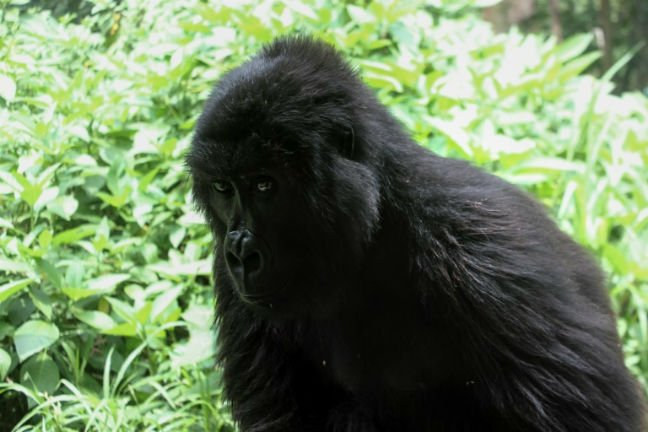5 park rangers, driver killed in DR Congo's Virunga wildlife sanctuary