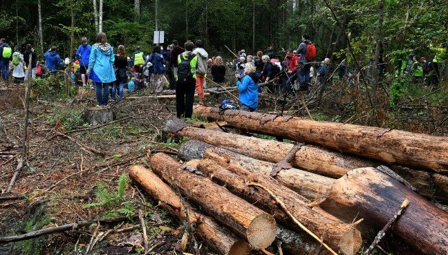 Poland broke law with forest logging: Court
