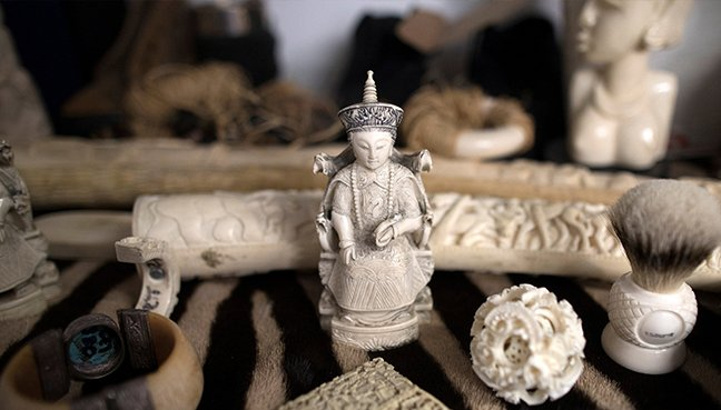 Ivory sales ban launched in United Kingdom  by Environment Secretary Michael Gove