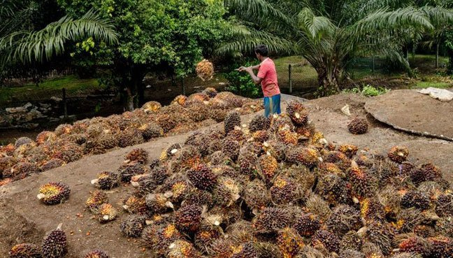 reaction on palm oil ban