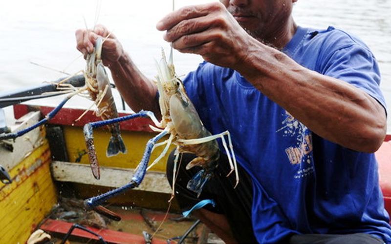 Nelayan Kg Makam tunggu musim hujan, rezeki udang galah | Free Malaysia Today (FMT)