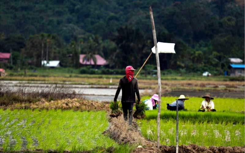 Hasil carian imej untuk dasar pertanian negara