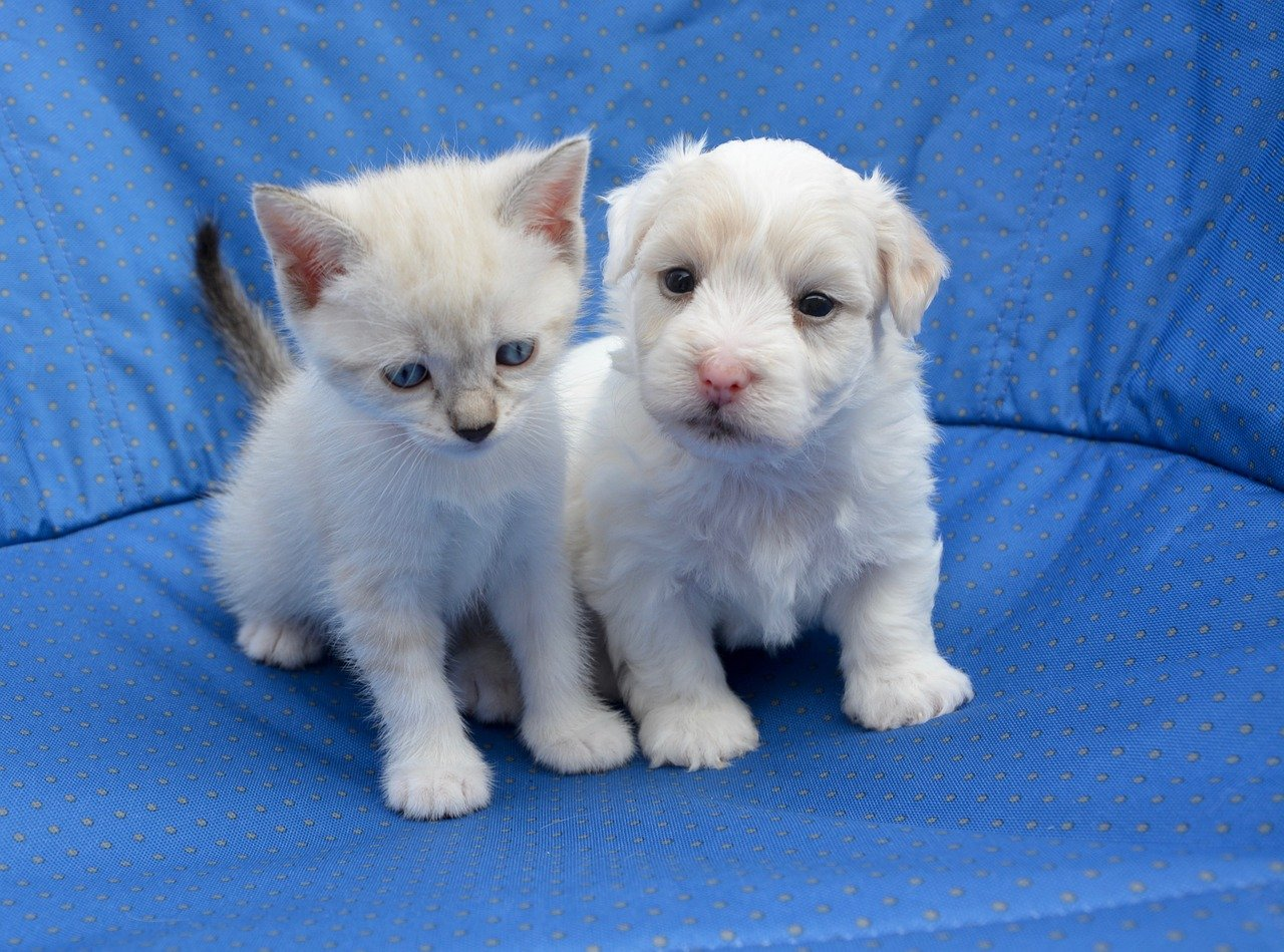Britain Bans Puppy Kitten Sales By Pet Shops Free Malaysia Today