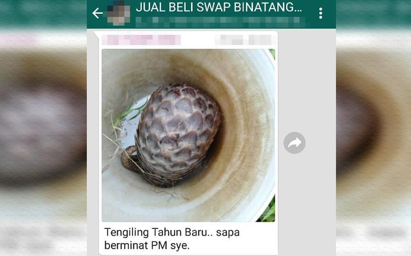 Whatsapp Group Janda Malaysia