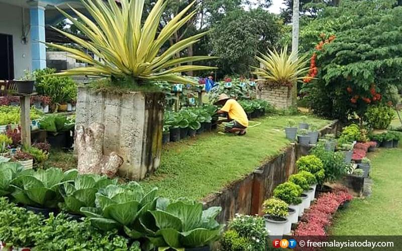 Suri Rumah Jana Rm300 Sehari Jual Tanaman Sayur Di Laman Rumah Free Malaysia Today Fmt