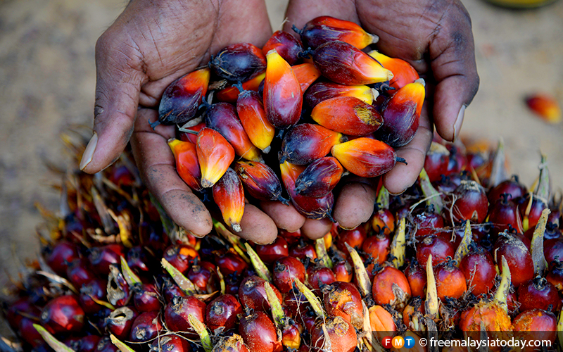 Fearing tobacco's fate, palm oil industry fights back | Free