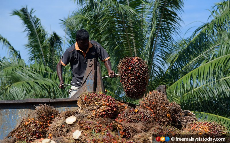 Malaysia to replace Indonesia as top palm oil supplier to