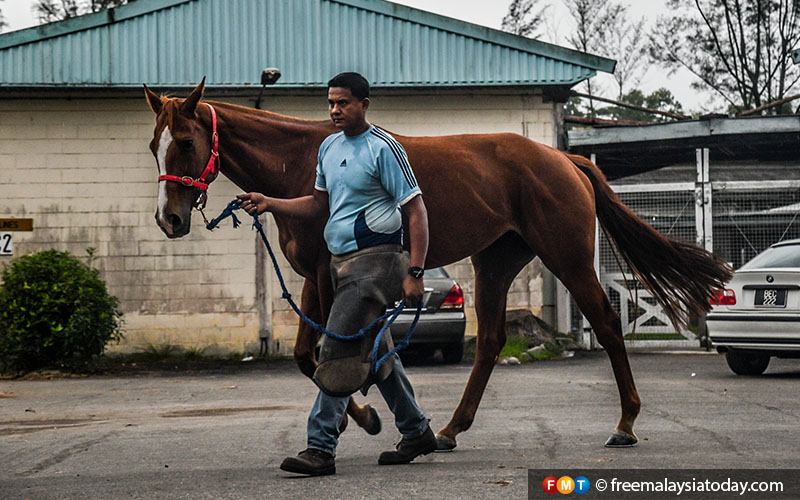 Every day, Kamal Bahrin inspects the shoes of the horses at the Selangor Turf Club.