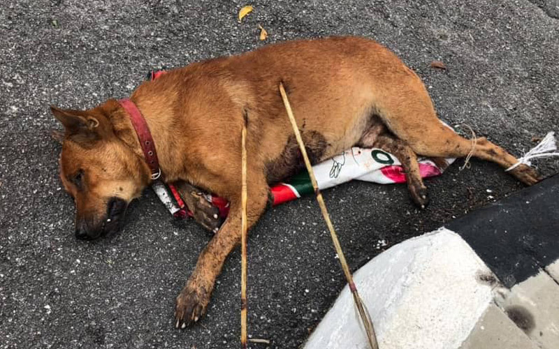 Police hunt for culprit who shot dog with arrows