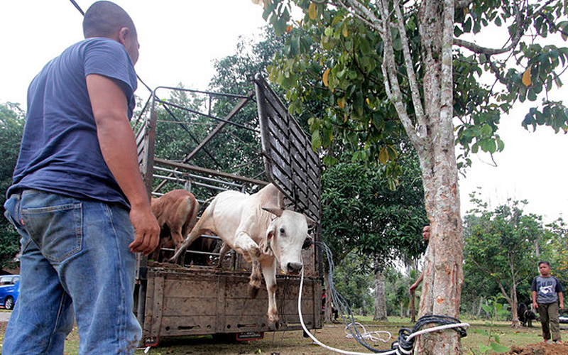Ritual slaughter and Islamic ethics   Free Malaysia Today