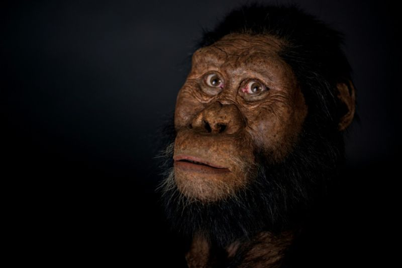 'All bets now off' on which ape was humanity's ancestor