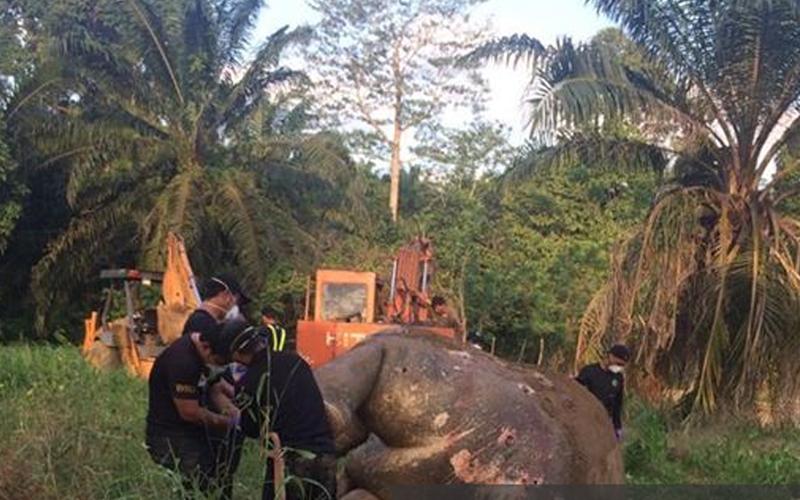 Gajah Bernama