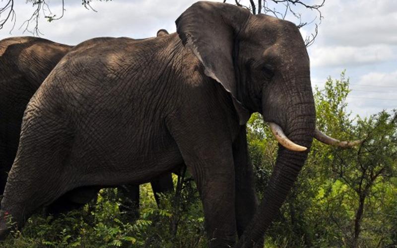Orang Asli Terputus Bekalan Air Bersih Selepas Gajah Musnah Tangki