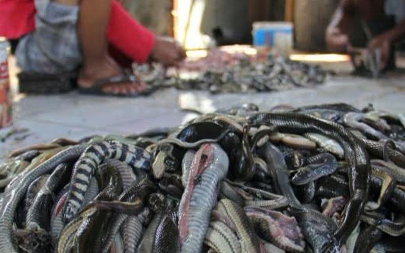 Pasar Wuhan jual binatang eksotik tempat penularan Koronavirus ...
