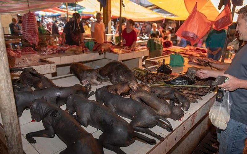 Pasar Basah Haiwan Eksotik Indonesia Lebih Ekstrem Free Malaysia